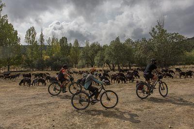 Cicloturismo y bicicleta en la Sierra de Madrid. Especies autóctonas.